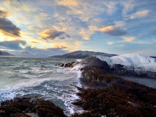 Bilde av Dyrøy fra Jeff Thomson
