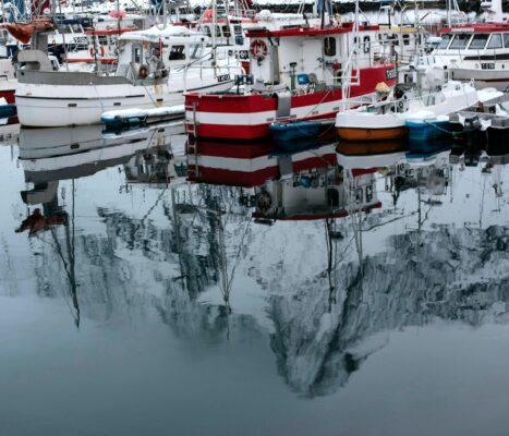 Bilde av Senja fra Ebba T. Jenssen