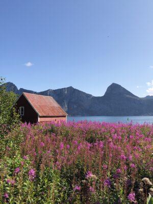 Bilde av Senja fra Kari Landrø