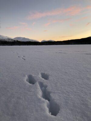 Bilde av Bardu fra Kari Landrø