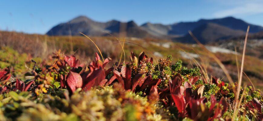 Bilde av Sørreisa fra Rune Sørmo