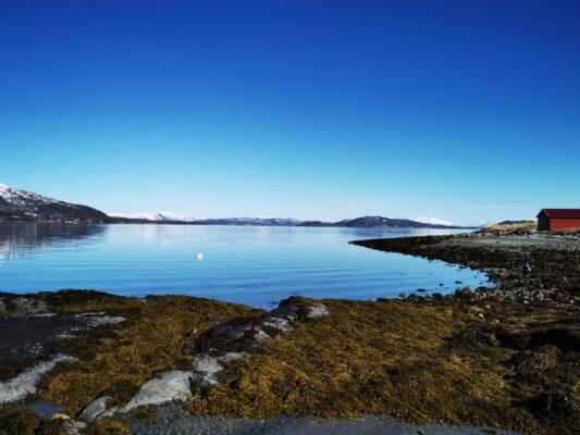 Bilde av Dyrøy fra Evy Hind