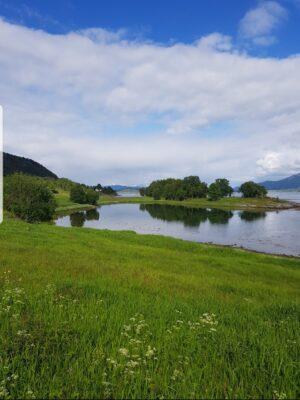 Bilde av Dyrøy fra Mona Olsen